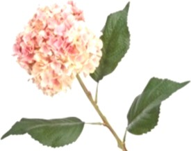 Flowers Forever Single Hydrangea Pink Assorted Artificial Flower