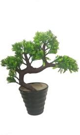 KAYKON Melamine Pot with Bonsai Bonsai Artificial Plant with Pot