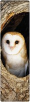 That Company Called IF National Geographic - Barn Owl 3D Bookmark (National Geographic, Multicolor)