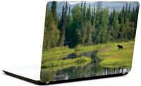 Pics And You Nature Themed 550 3M/Avery Vinyl Laptop Decal (Laptops And MacBooks)