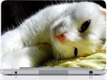 Rockmantra Cat Sleepamyls50856