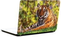 Pics And You Tiger Triumph Vinyl Laptop Decal (Laptops And Macbooks)