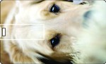 Printland Credit Card Cute Dog_1