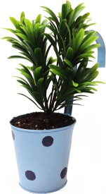 TNZ Creations Plant Container