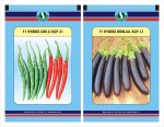 Sungro Seeds Limited Hybrid Chilli and Brinjal Long Seeds Combo Pack