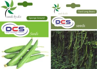 DCS Sponge Ground & Yard Long Beans