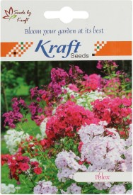 Kraft Seeds Phlox Twinkle Dwarf Mix Seed