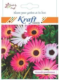 Kraft Seeds Mesembrynthemum/Ice Flower (Pack Of 5) Seed