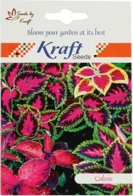 Kraft Seeds Coleus Leaf (Pack Of 20) Seed