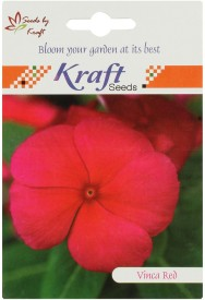 Kraft Seeds Vinca Pacifica Flower (Pack Of 20, Red/Cherry Red) Seed