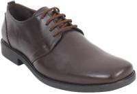 Delize 8063A -Brown Lace Up Shoes