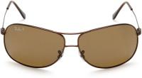 Ray Ban Aviator Sunglasses Brown